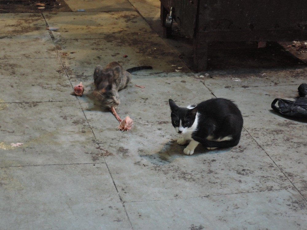 No, you won't have to fight cats for scraps at the meat market!
